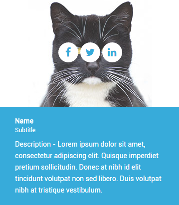 cat introduction WordPress shortcode on hover
